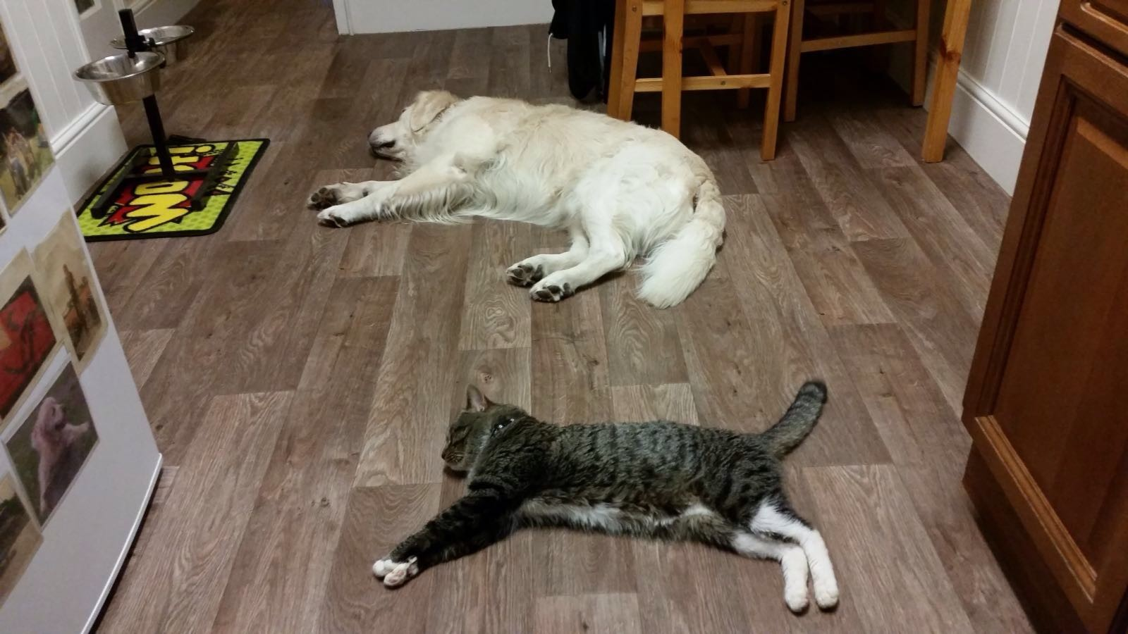 relax-dog-cat-together